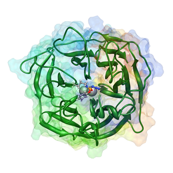 Molecular Dynamics Model of Paraoxonase