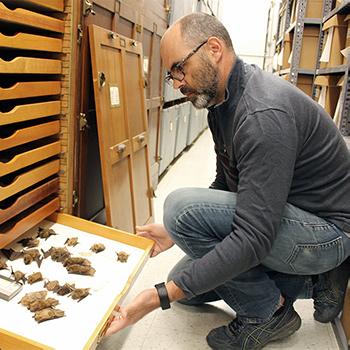 Bryan Carstens examines bat specimens