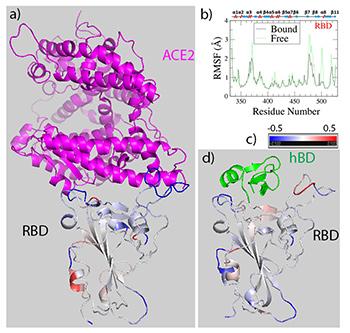 COVID-19 Drug Research