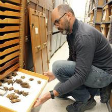 Bryan Carstens examines specimens in the lab.
