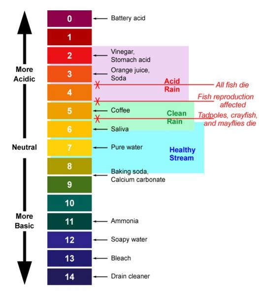 Common items on the pH scale