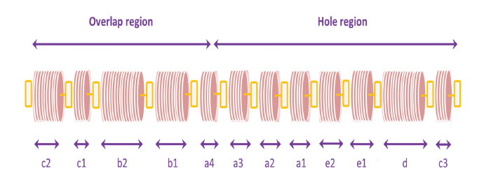 Illustration of ight and dark bands across the axis of the fibril.
