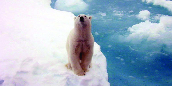 Photo: Polar bear on iceberg
